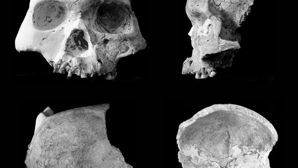 Frühmenschen-Fund: Die schrägen Typen aus den Rotwildhöhlen