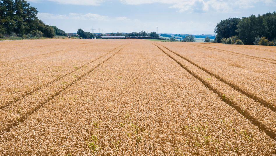 Die Felder und die Betriebe werden größer