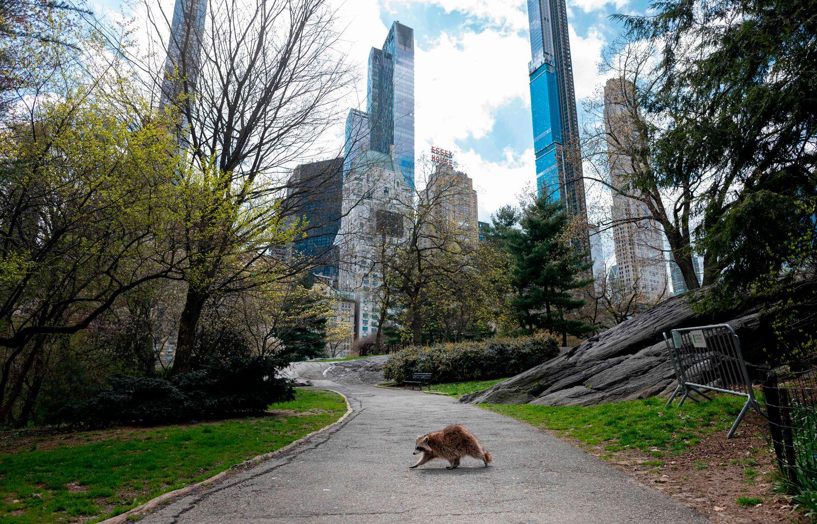 Coronavirus outbreak transforms New York's Central Park