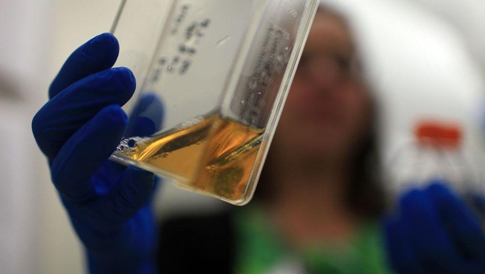 Stammzellen in der Kulturflasche: Forschung auf Förderung angewiesen
