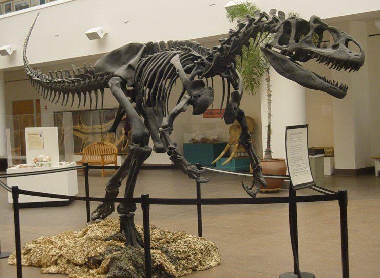 EINMALIGE VERWENDUNG Allosaurus