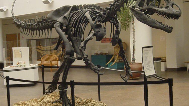 Allosaurus fragilis: Mächtiger Raubsaurier des Jura