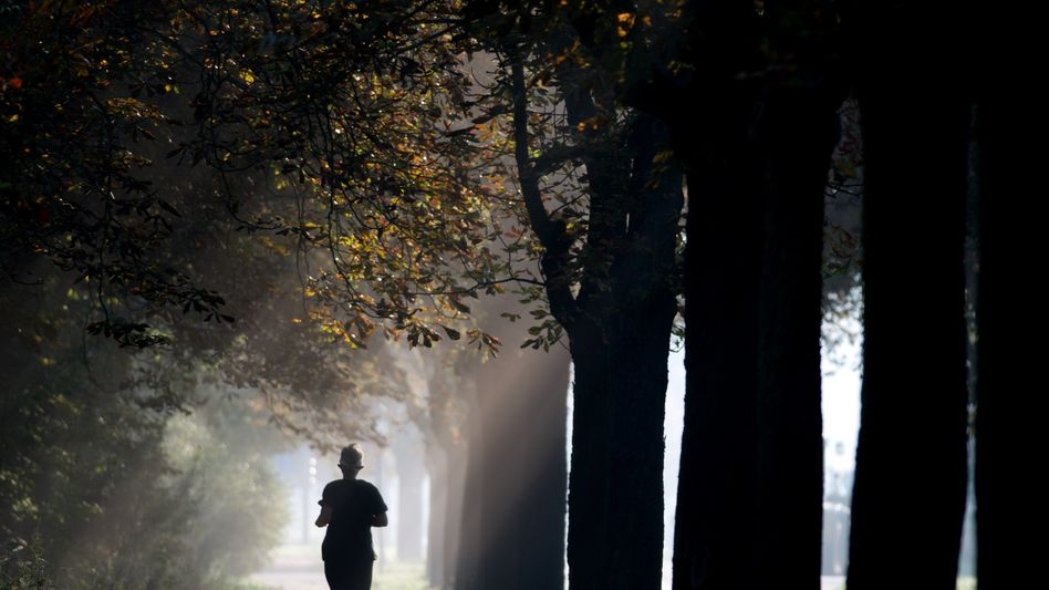 Laufen im Wald: Waren es die Nachwehen des Katers oder ein Runner's High?