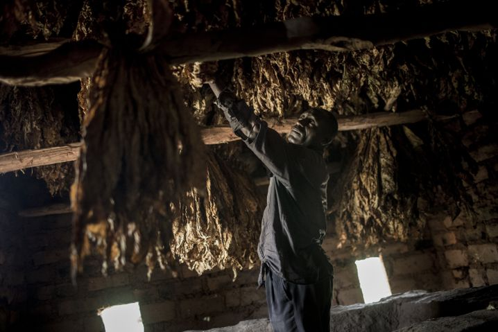 Omari Jumanne Dengu is a tobacco farmer who dries and prepares his leaves himself.