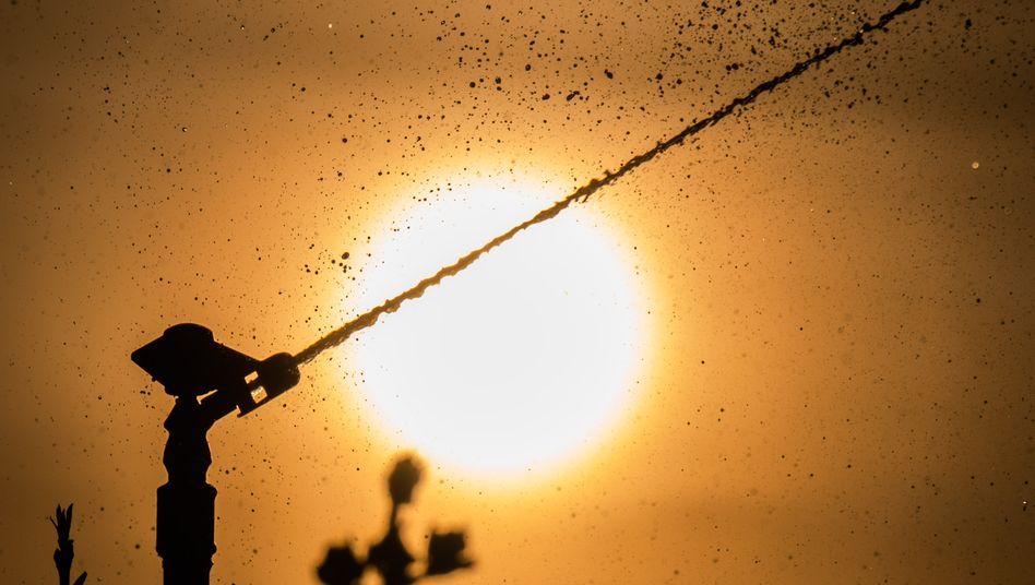 Viele Obstplantagen wie hier im niedersächsischen Laatzen werden nachts gesprengt, um Frostschäden an den Blüten zu verhindern