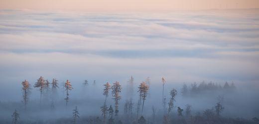 Deutschland im Nebelzauber: November kann so schön sein!