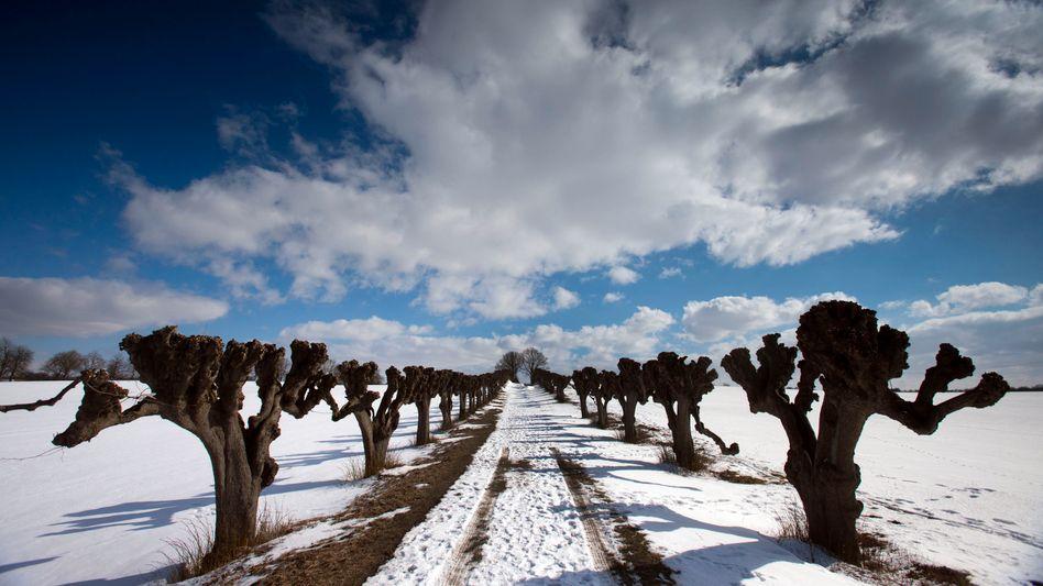 Winterfest: Die Natur geht verschiedene Wege, um Schäden durch Frost zu vermeiden