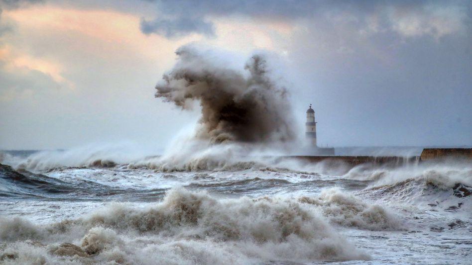 """Steigende Temperaturen in der Nordsee: """"Hering und Kabeljau fliehen schon in kühlere Gewässer"""""""