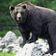 Italien hat jetzt einen Problembären