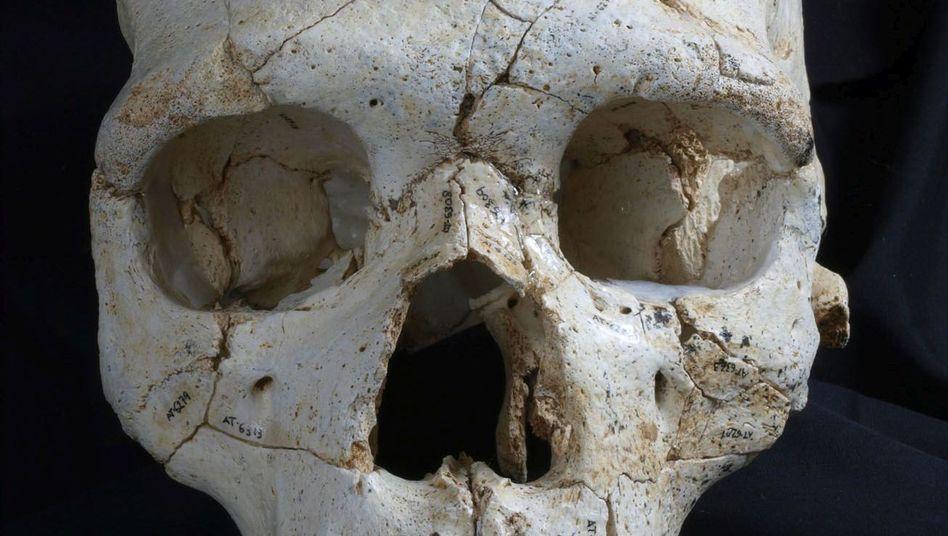 Schädelfund aus Nordspanien: Mord vor 430.000 Jahren?
