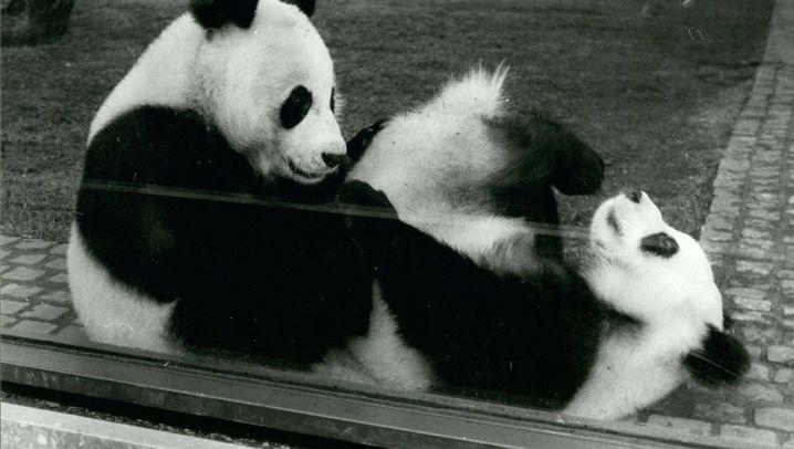 Tiere als Staatsgeschenke: Flauschige Diplomaten
