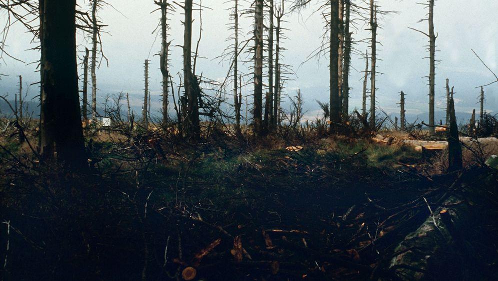 Deutscher Wald: Erst versauert, dann auferstanden
