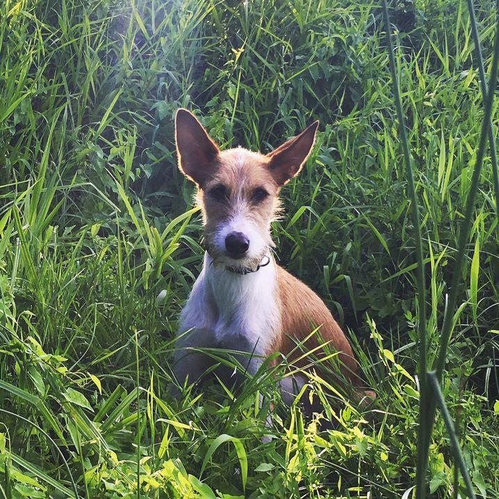 Juri, der Hund der Autorin