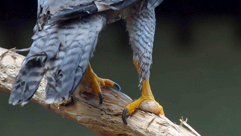 Stammbaum der Vögel: Der Weg zum Verlust der Bodenhaftung