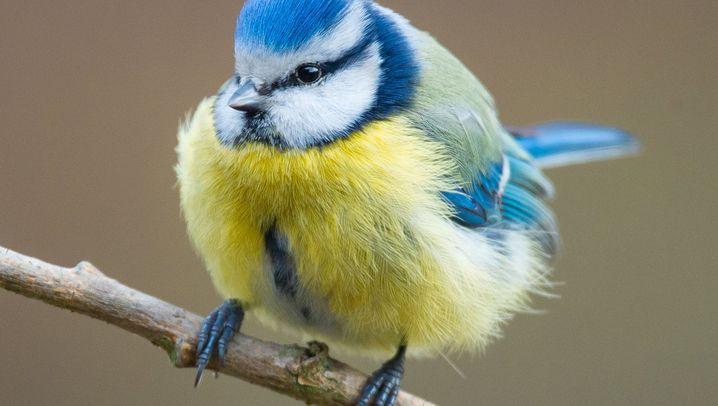 Rätselhafter Schwund: Der Zauber der Wintervögel