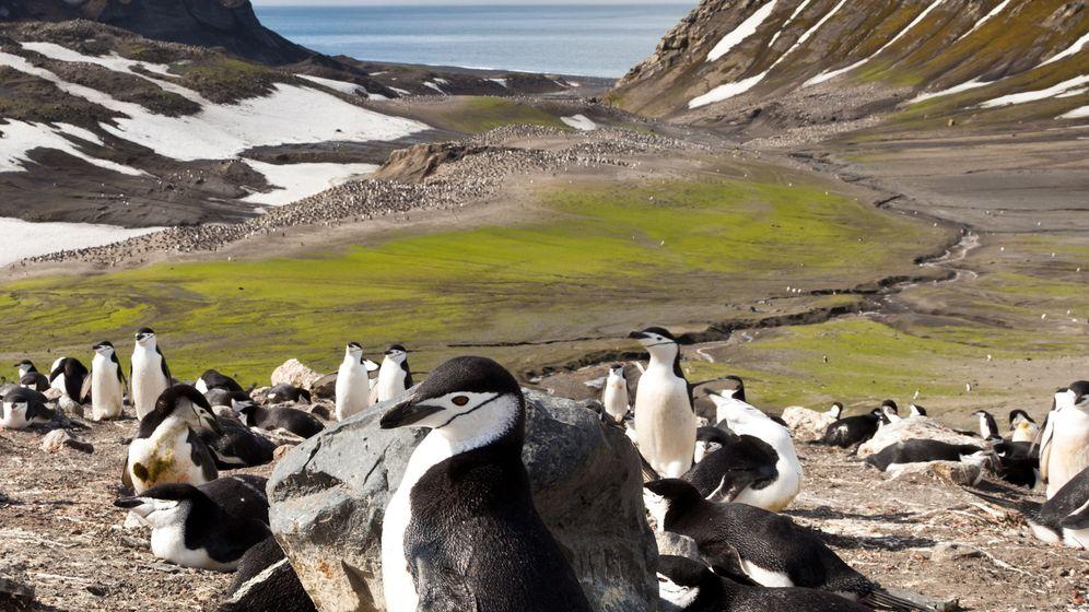 Antarktis: Moos statt Eis