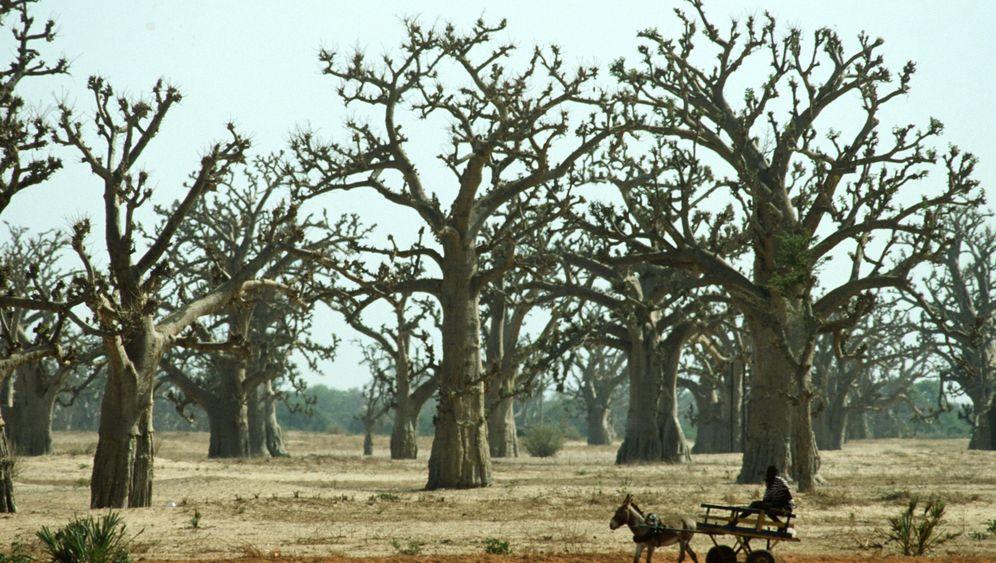Inventur: Waldbestand größer als gedacht