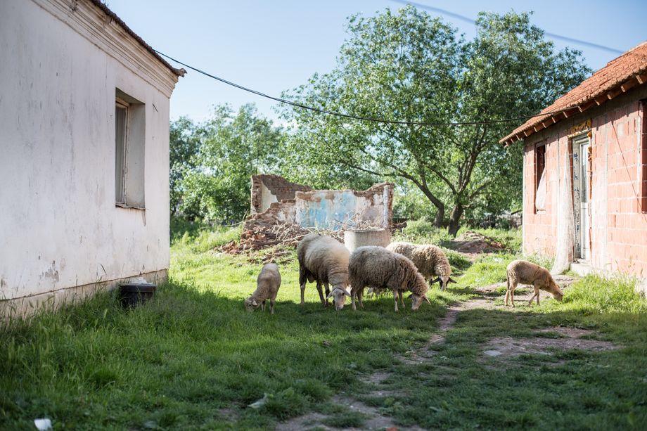 Blick aufs zerfallene Elternhaus