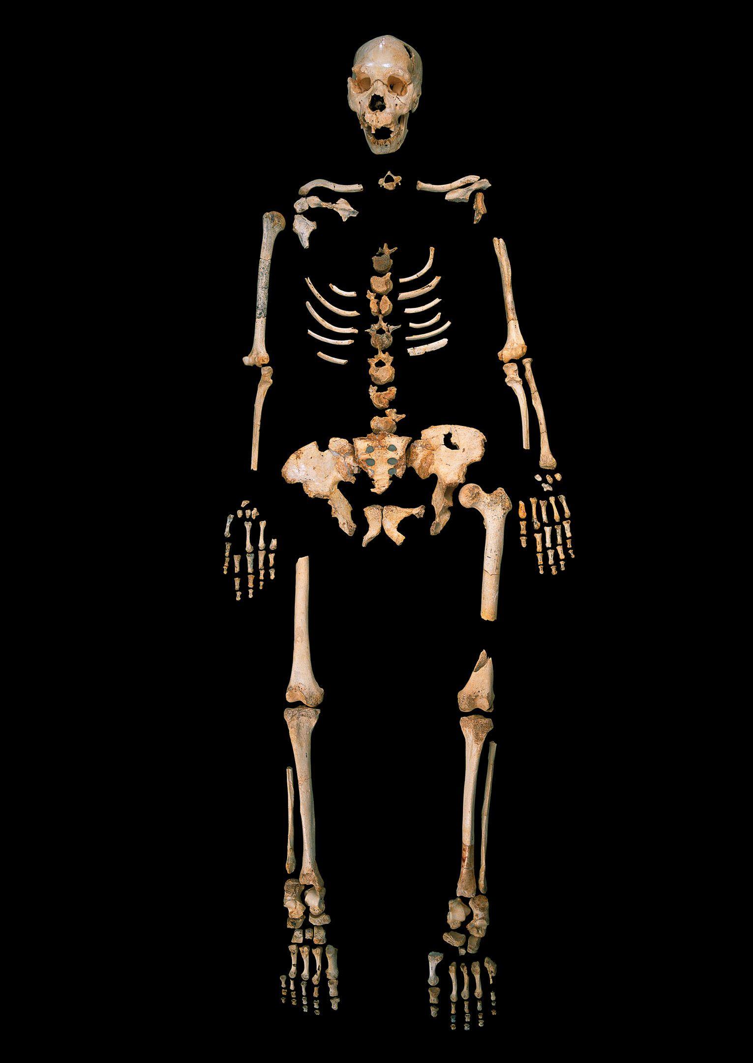 EINMALIGE VERWENDUNG Human Ancestor DNA