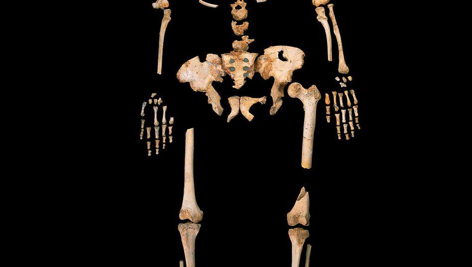 Etwa 400.000 Jahre altes Skelett eines Urmenschen, gefunden in Sima de los Huesos