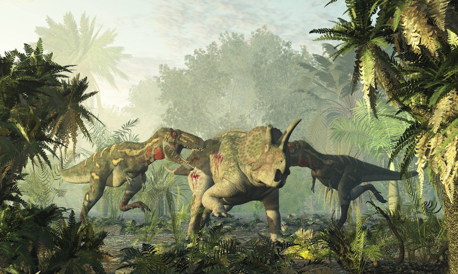 Nanotyrannus et triceratops Nanotyrannus and triceratops Nanotyrannus etait le plus petit membre