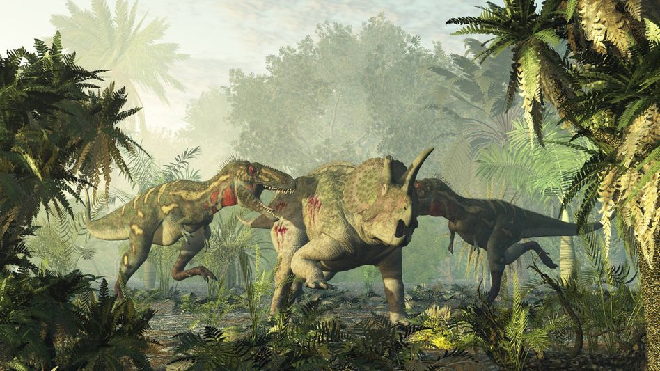 Fleischfresser trifft Pflanzenfresser: Auf dieser Darstellung misst sich ein Nanotyrannus mit einem Triceratops