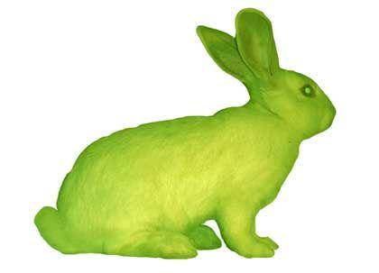 Quallengene im Fell: floureszierendes Kaninchen