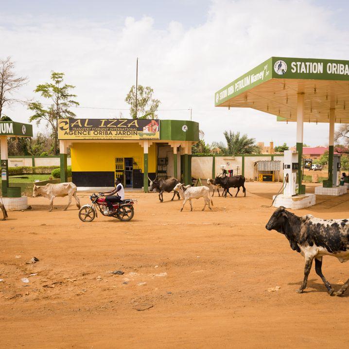 Straßenszene in Niamey: Zu arm für die Flucht