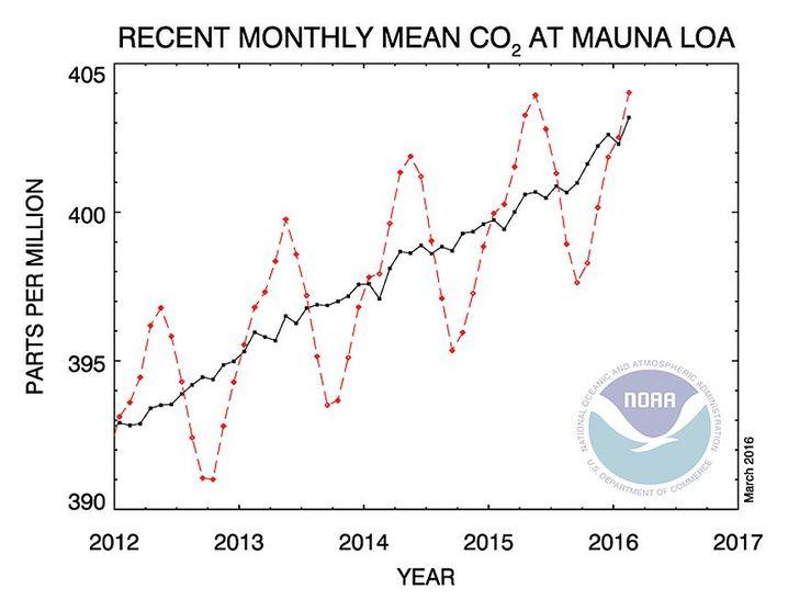 Anstieg der CO2-Konzentration in der Luft, gemessen auf Hawaii: Die schwarze Linie zeigt den langjährigen Durchschnitt, die rote die Veränderung von Monat zu Monat.
