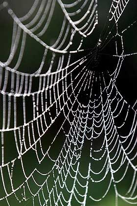Das Werk einer Spinne ist kein Netzwerk