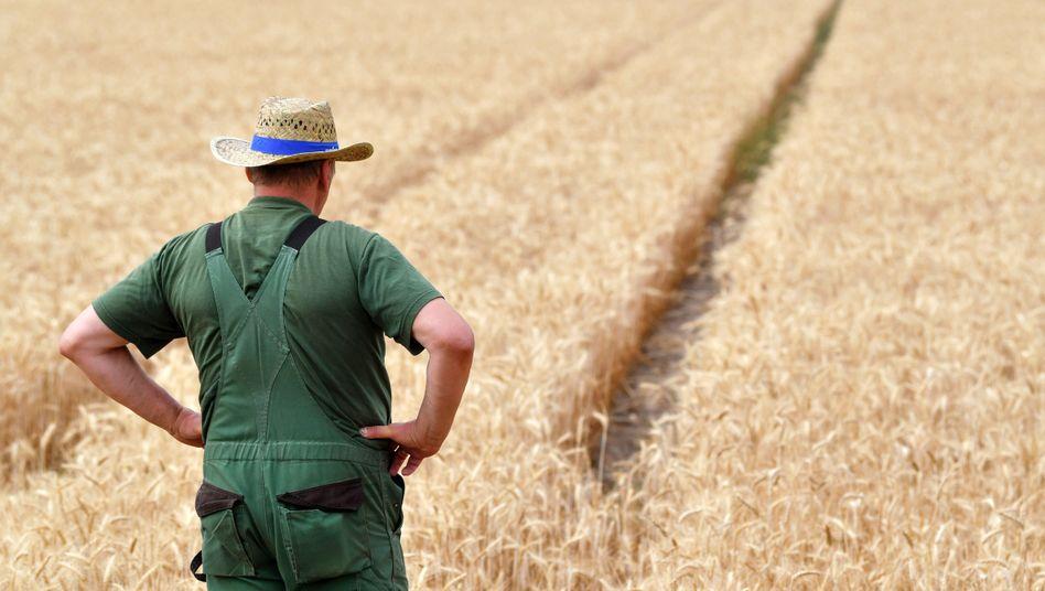 Mitarbeiter einer Agrargenossenschaft vor einem Weizenfeld