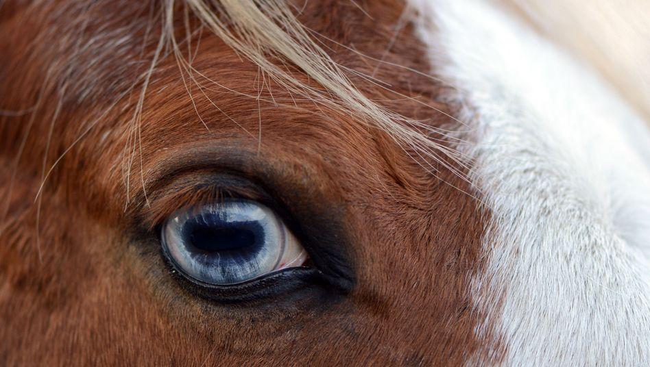 Pferd im Fokus
