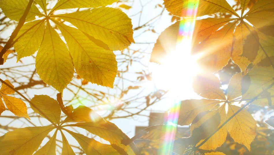 """Sonniger Herbsttag (Archivbild): """"In unseren Breiten haben 68 Prozent der Bevölkerung einen Vitamin-D-Mangel"""""""