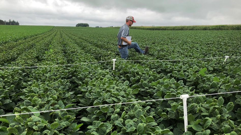 Sojabohnenfelder in den USA