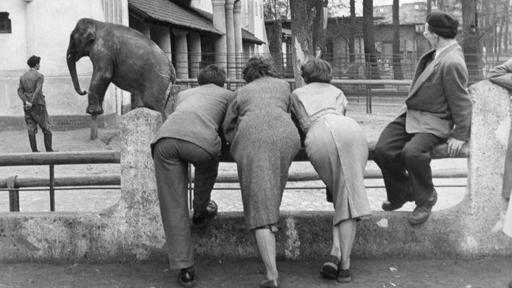 Friedrich Seidenstücker: Elefanten und andere Zoobewohner