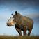 Das Nashorn, der Lockdown-Verlierer