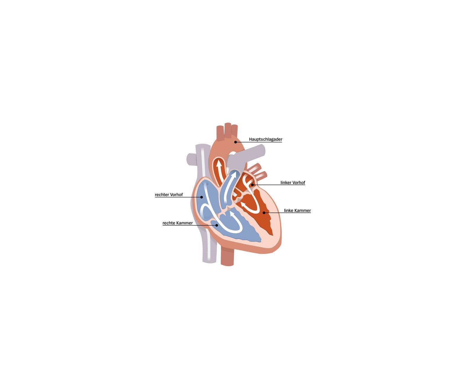 Herz Illustration v2