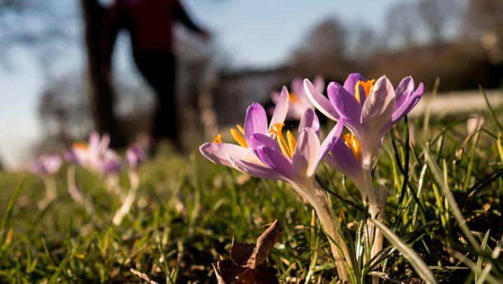 Frühling im Februar: Sonnig und mild