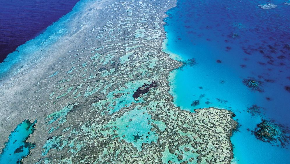 Korallen: Lebensgemeinschaft mit Krabben