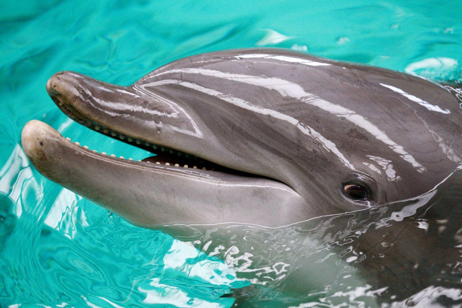 Delfinarium im Zoo Münster schließt 2012