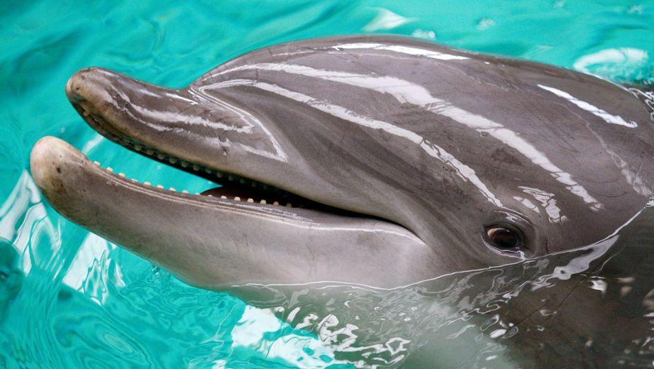 Delfin im Allwetterzoo Münster: Ab 2012 keine Vorführungen mehr