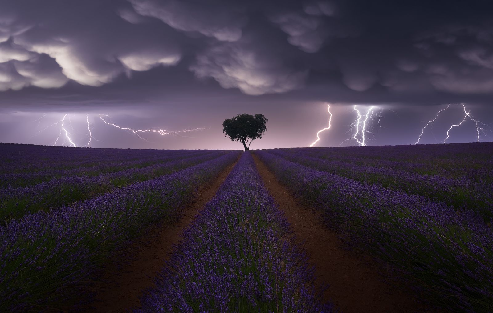 Electric Storm on Lavender