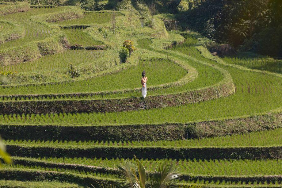 Hohe Kunst: Die »Subak«-Bewässerungssysteme in Indonesien sind mittlerweile Weltkulturerbe