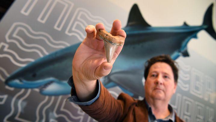 Fossiliensammler Philip Mullaly mit seinem Fund