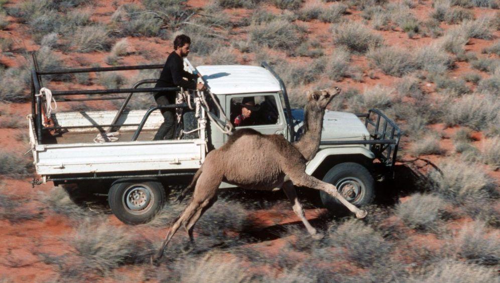 Wilde Kamele: Jagd im Outback