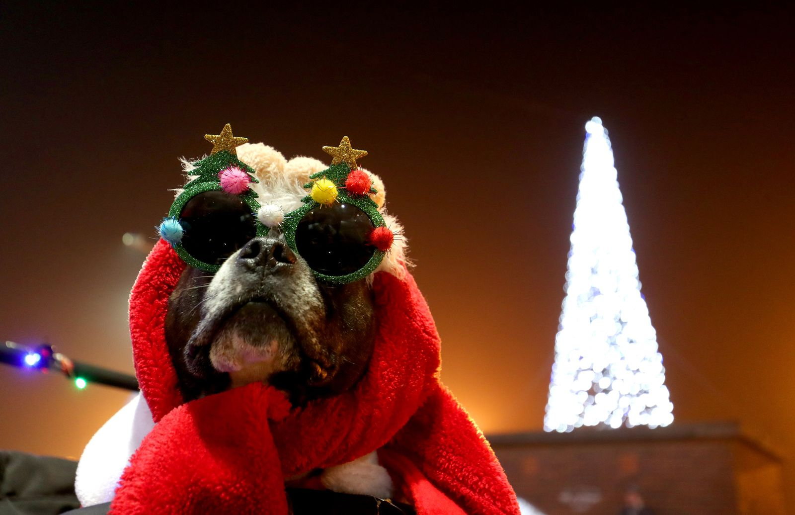 Weihnachtshund