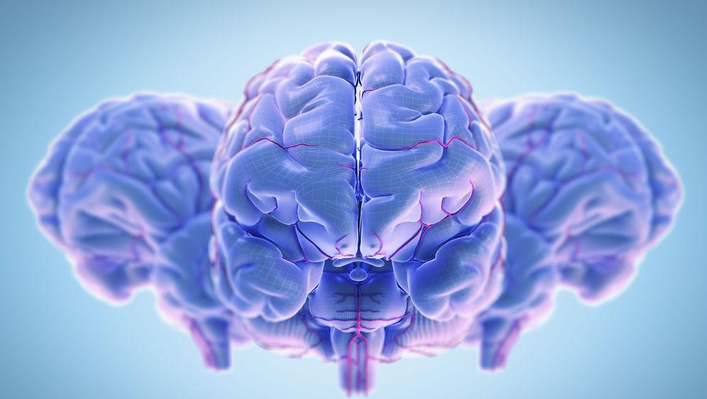 Nobelpreis Medizin 2014: Navi im Hirn