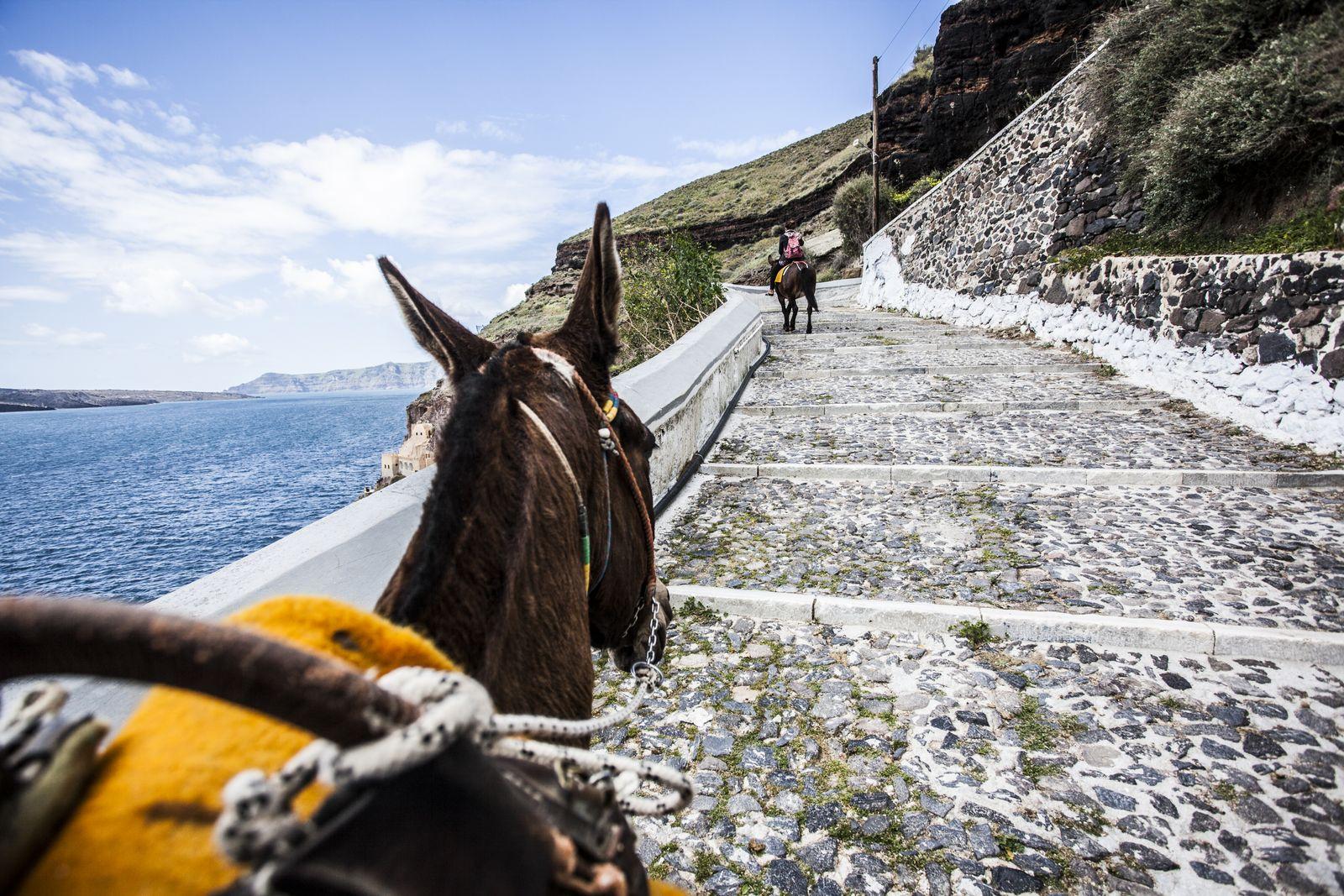 EINMALIGE VERWENDUNG Esel/ Santorini