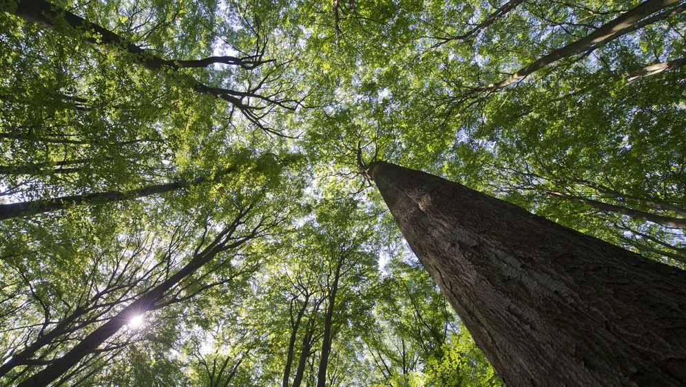 Bericht: Wo der Wald wächst