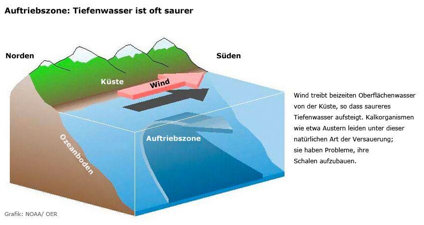 Grafik - Auftriebszone Tiefenwasser - Versauerung
